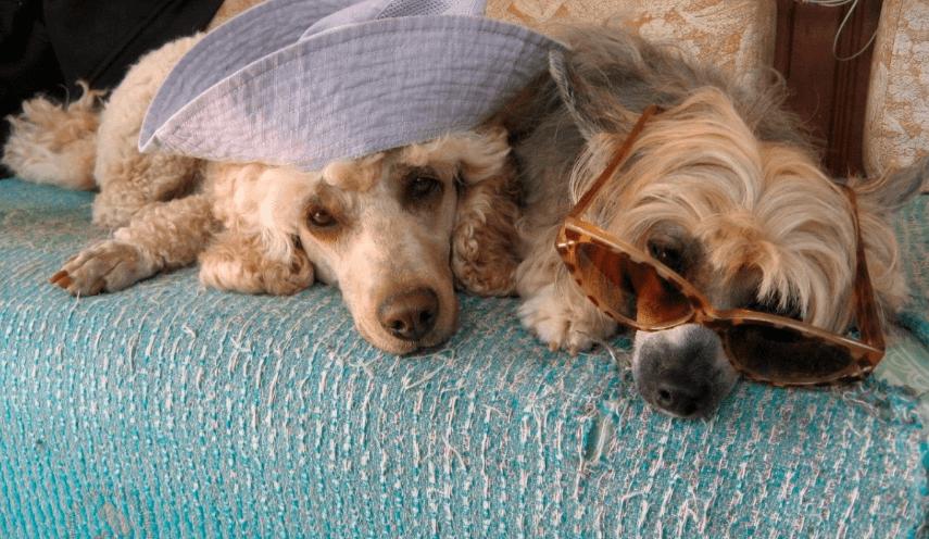 собаки дачники